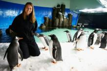 Vera Zvonareva and penguins in Melbourne.JPG